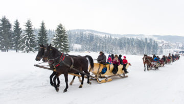 HORSE-DRAWN SLEIGH RIDE IN ZAKOPANE — A GREAT ATTRACTION DURING YOUR WINTER BREAK